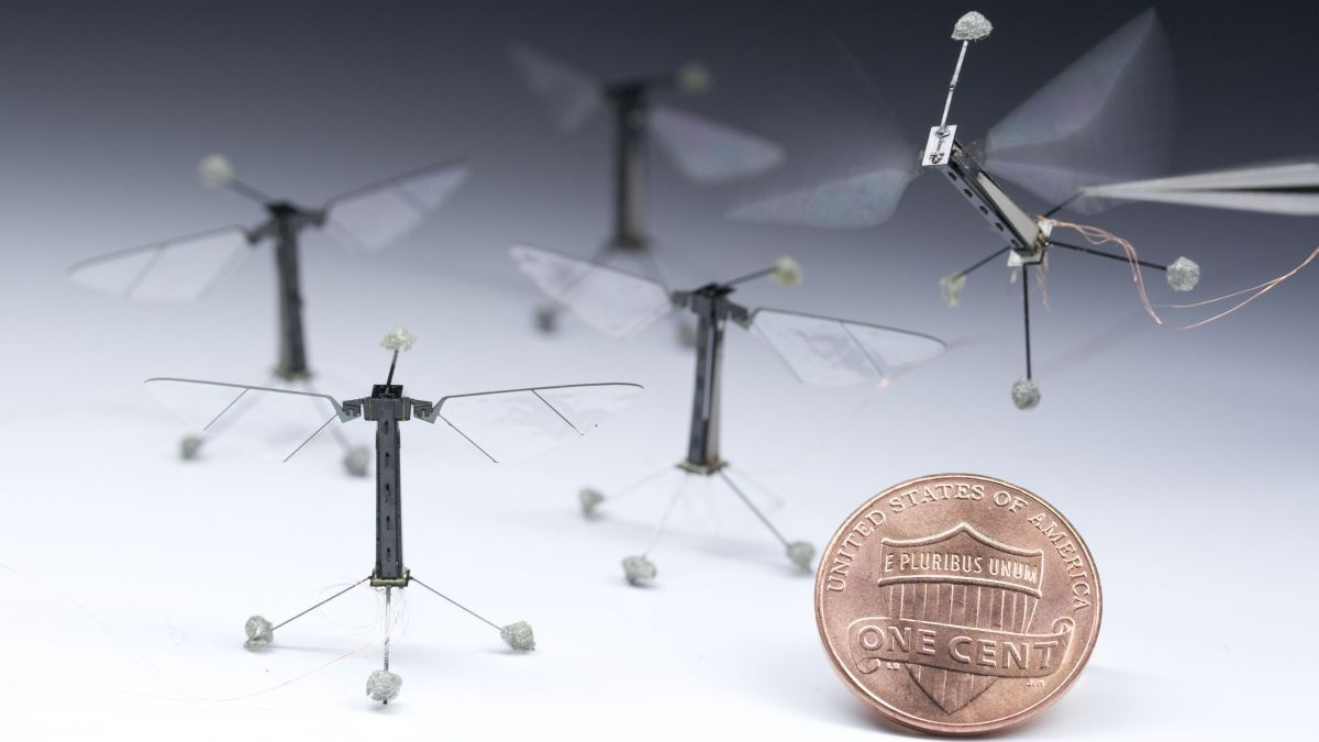 national-science-foundation______robobee-pf3343_photo02_h