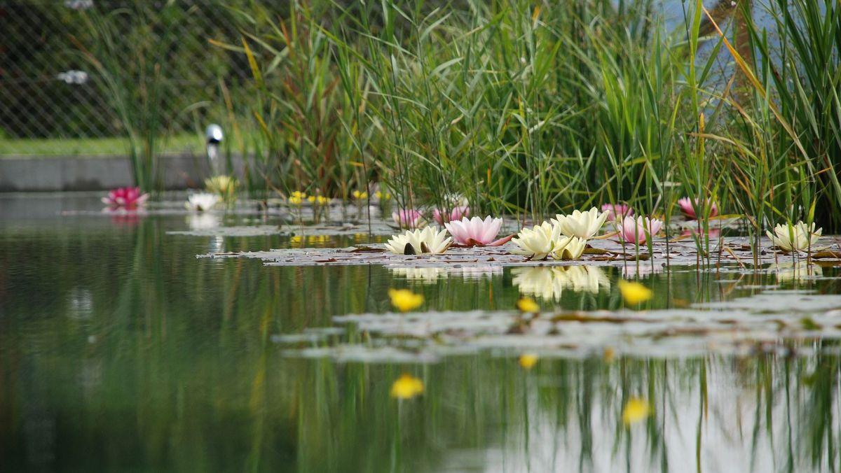 Super 9 Schritte zum eigenen Gartenteich - LEBENSART #QR_29