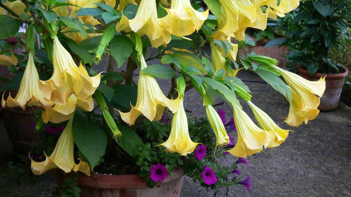 kuebelpflanzen ueberwintern lebensart
